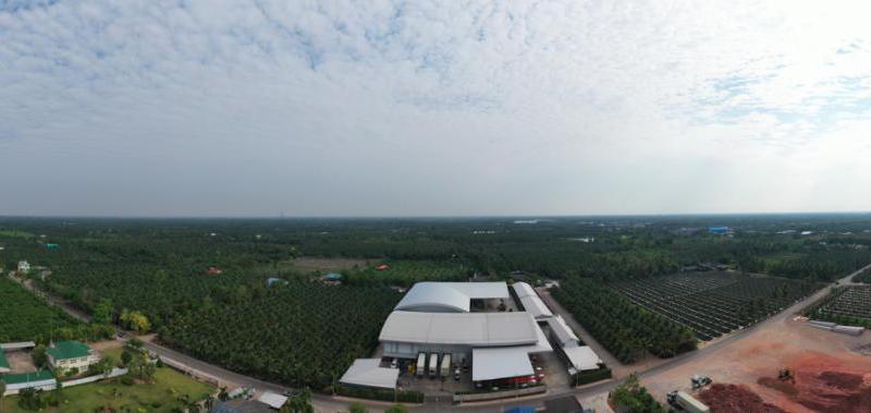 苏宁卞农亲赴泰国,现场承包2000万颗椰青