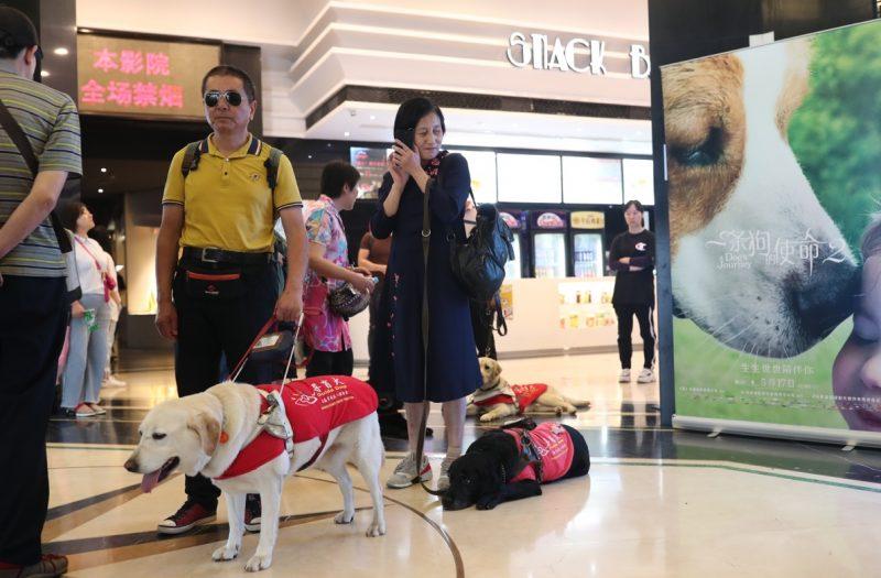 """绿皮书、一条狗,阿里影业联合残联公益正能量让视障者""""无障碍观影"""""""