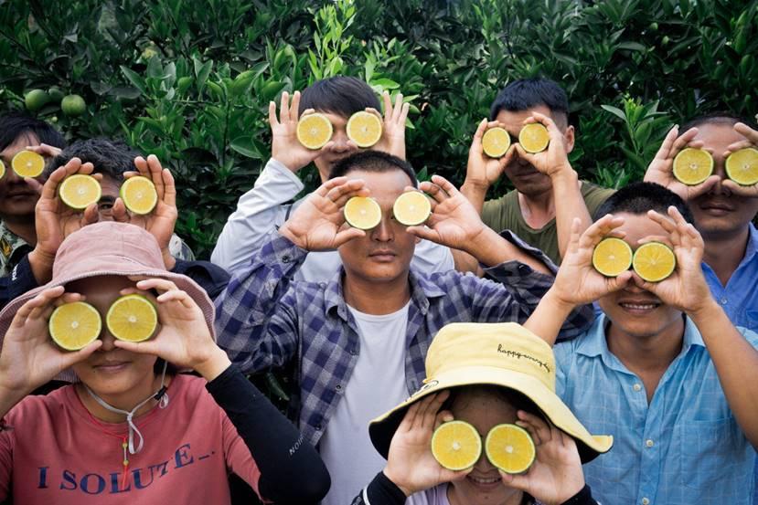 新电商拼多多携手褚橙,消费端供给侧同发力推动数字农业