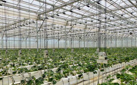"""人工智能和顶尖农人比赛种草莓,第一届""""多多农研科技大赛""""启动招募"""