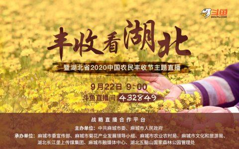 迎中国农民丰收节,上斗鱼赏麻城菊花