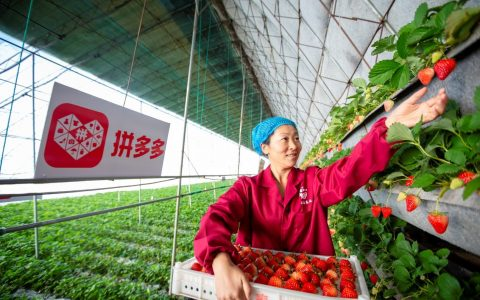 """""""原产地直发""""受追捧 90后丹东小伙在拼多多卖草莓年销千万元"""