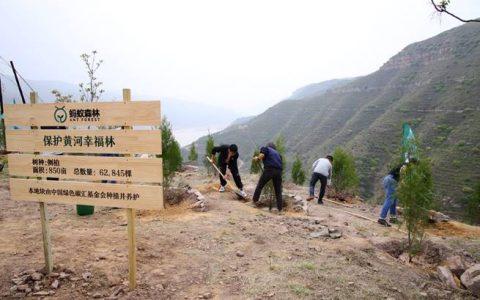 """全国网友""""手机种树""""再添新绿!栽下6万棵侧柏保护黄河生态"""