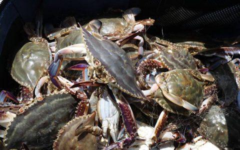 """盒马启用""""15度海水恒温漂流舱"""",梭子蟹成活率可提高至少15%"""